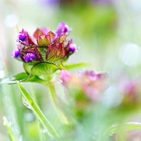 Wildblumen