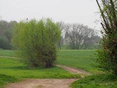 Rheinwiese bei Ehingen