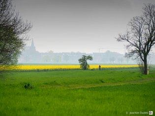 Rheinwiese mit Blick auf Uerdingen