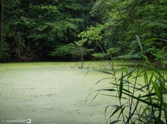 Alter Steinbruch im Duisburger Stadtwald