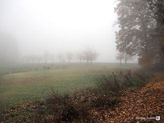 Nebel im Eltztal