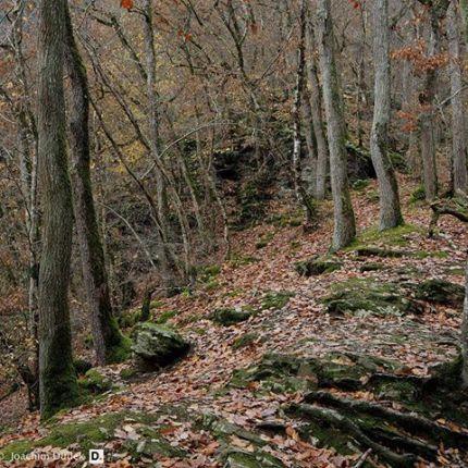 Eichenwald mit Zusatz