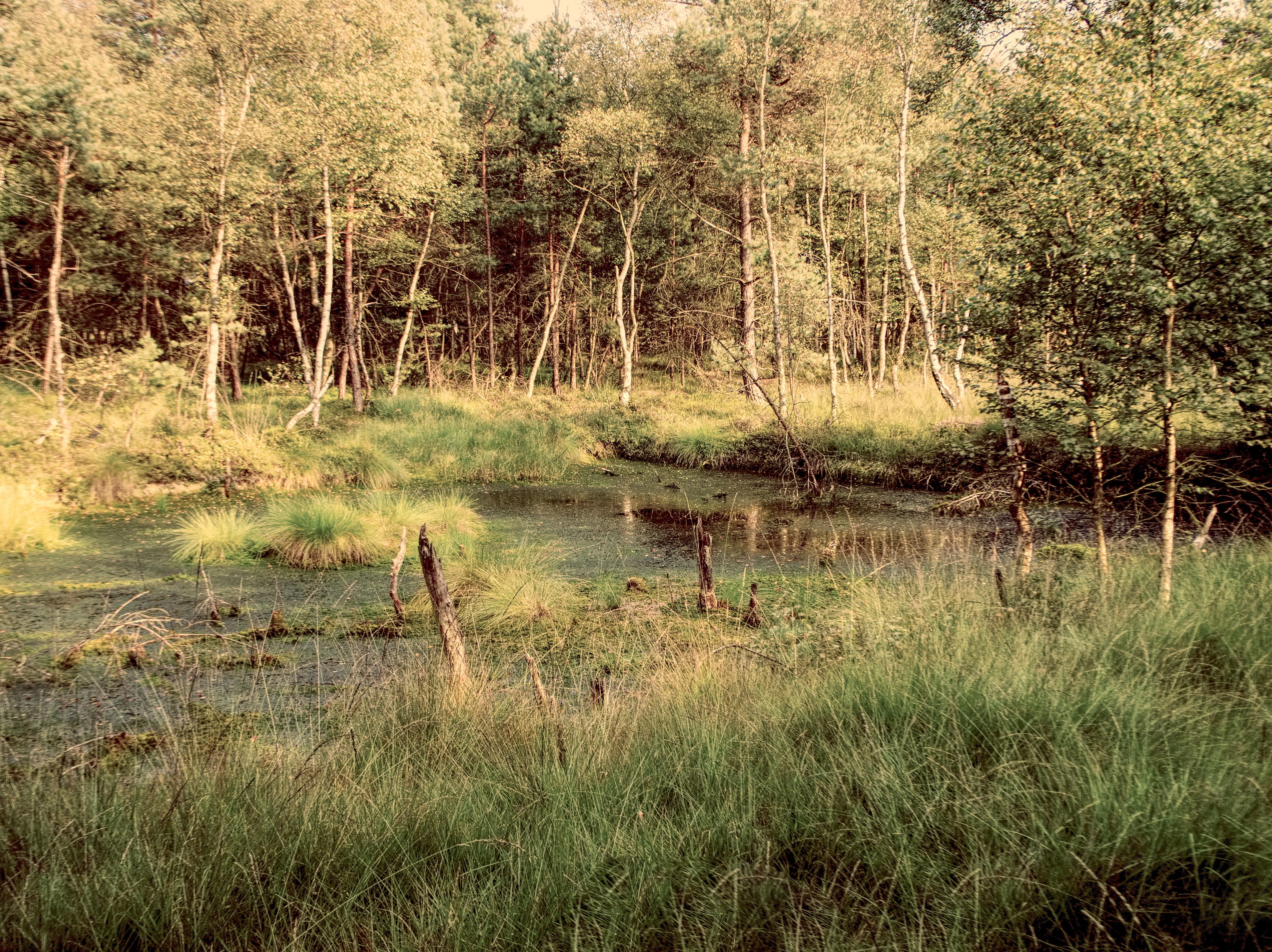 Schneverdinger Moor