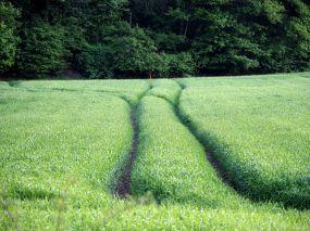 Spuren im Korn